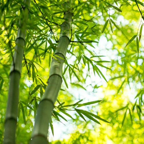 bamboo-branch-forest-beautiful-green-nature